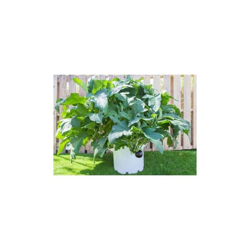 Jardinera Mypot